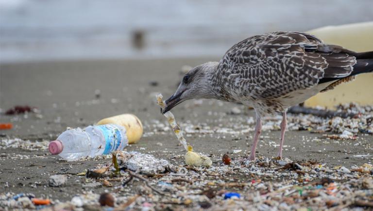 Reducir Plástico de los Océanos